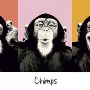 Chimps Popart Ovijuliste