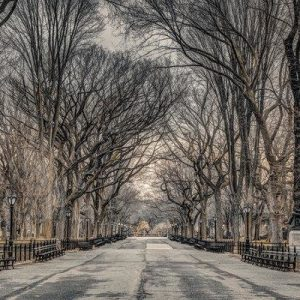 Frank Assaf New York Central Park Juliste