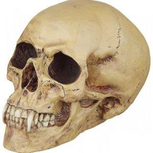 Markus Mayer Vampire Skull Koristekallo